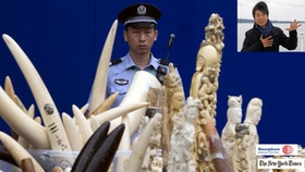 409c6ee070e9 Lang Lang urges travelers not to bring ivory back to China   Sinospere  New  York Times
